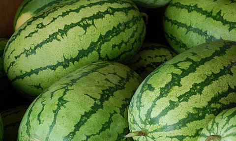 Klondike Striped Blue Ribbon Watermelon