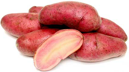 Red Thumb Fingerling Organic Potato
