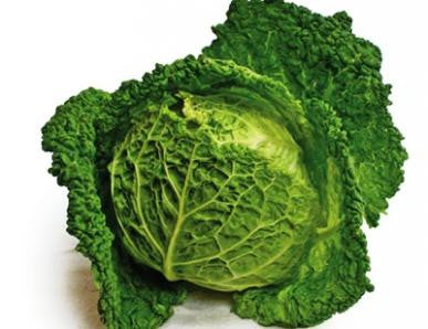 Savoy Cabbage, Perfection Drumhead
