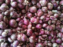 Organic Shallots, French Red