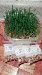 Wheatgrass Kit 3