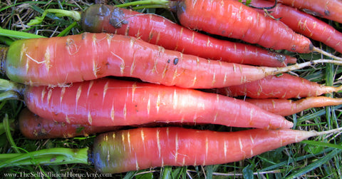 Atomic Red Carrots