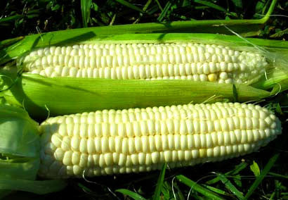 Aunt Mary's Sweet Corn