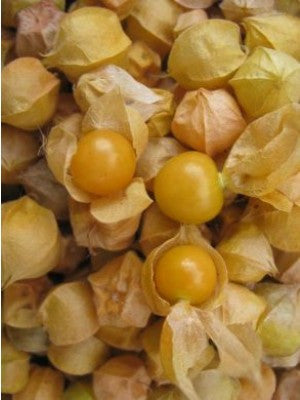 Cossack Pineapple Ground Cherry