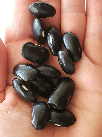 Black Coat Runner Bean