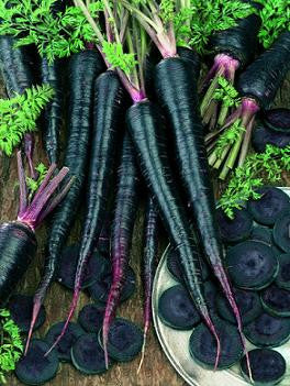 Black Nebula Carrot