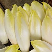Witloof Chicory