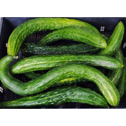 Chinese Snake Curved Cucumber