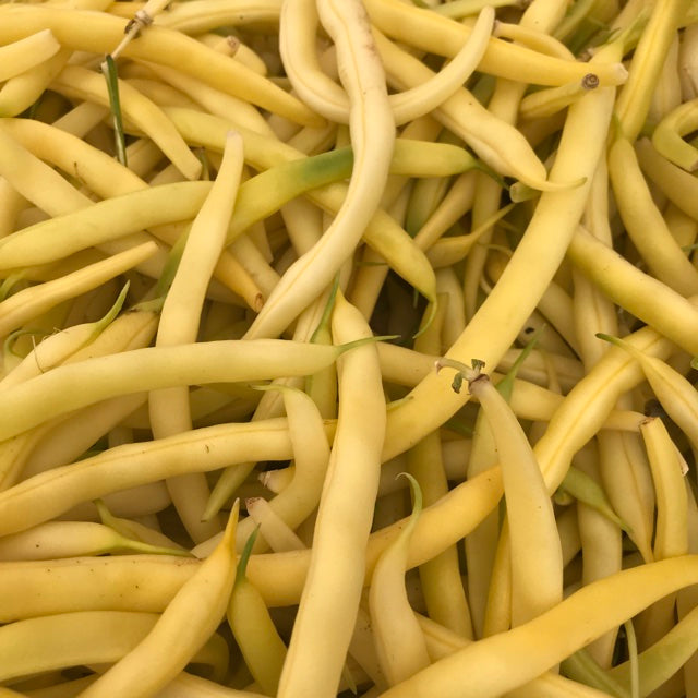 Gold Rush Yellow Wax Bush Bean