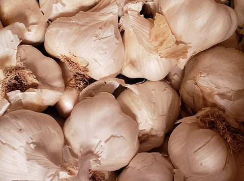 California Late White Seed Garlic