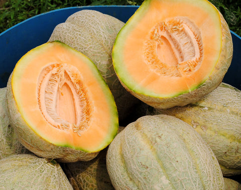 Pike Muskmelon