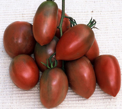 Purple Russian Tomato