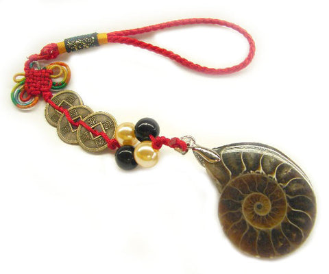 Snail Ammonite - Asianly