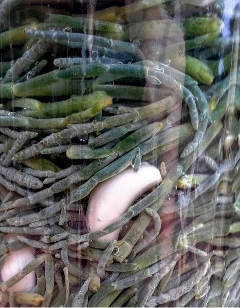 Pickled Sea Asparagus