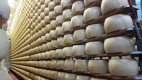 lots of cheese on racks