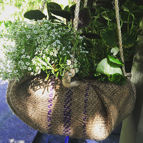 planted and beautiful burlap hanging basket