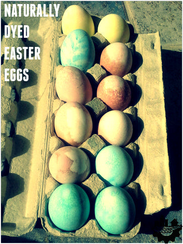 Naturally Dyed Easter Eggs - Vibrant Colours, Straight from Nature!