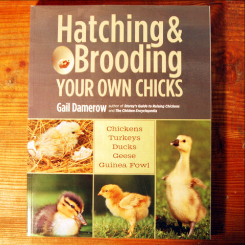Hatching & Brooding Your Own Chicks - Gail Damerow
