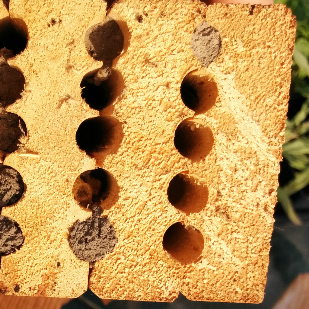 20160210 Intro to Mason Bees
