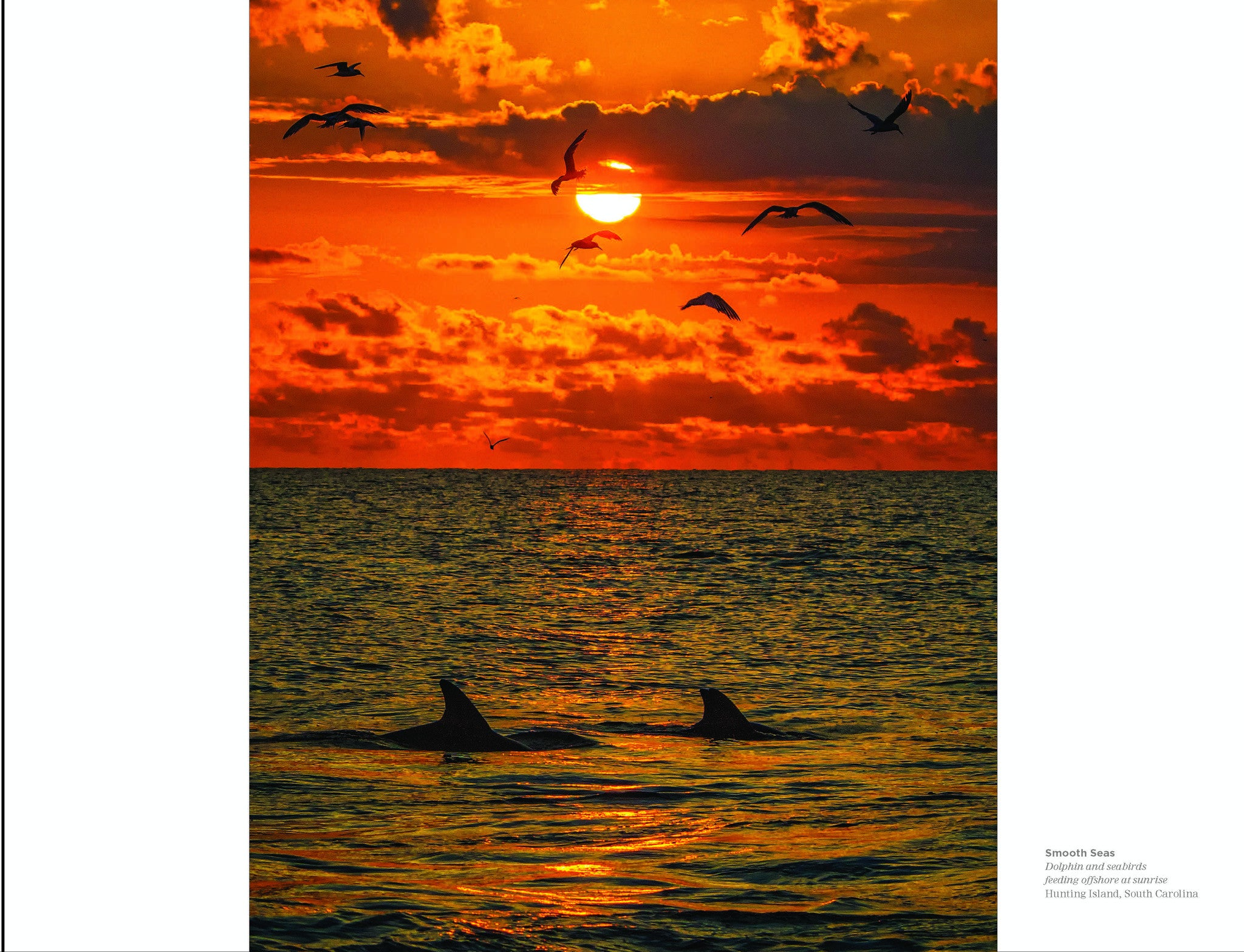 Smooth Seas: Dolphin and sea birds Hunting Island SC Beholding Nature Eric Horan photography book