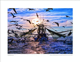 Feeding The Flock: Shrimper cleaning bycatch St. Helena Sound Beholding Nature Eric Horan photography book