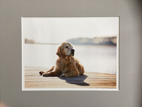 DOGS: LARGE Fine Art Photo Print