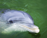 Dolphin photograph: Hilton Head Island - Interactive Coffee table book. Videos from around the island. Starbooks