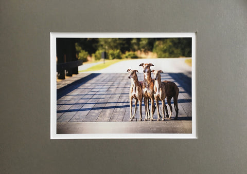 DOGS: SMALL Fine Art Photo Print