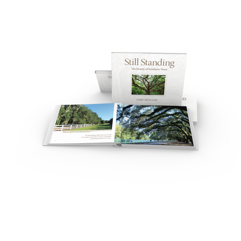 Alley of Live Oak Trees. Book: Still Standing, The beauty of Southern Trees. Gary Mullane