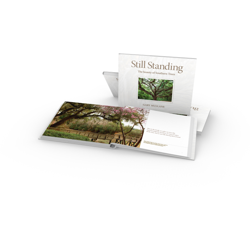May River, Bluffton SC Live Oak Trees. Book: Still Standing, The beauty of Southern Trees. Gary Mullane Starbooks