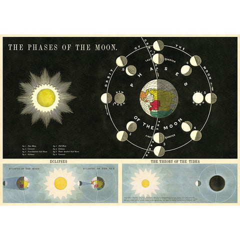 Cavallini Poster - Phases of the Moon