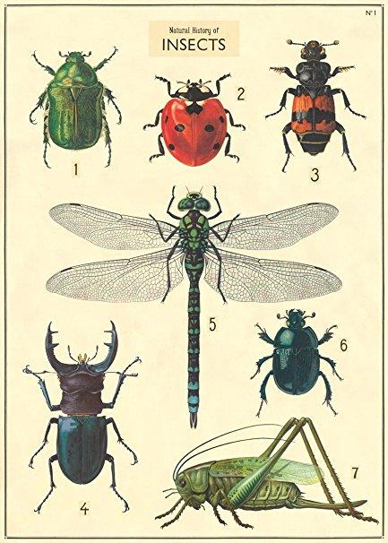 Cavallini Vintage Poster - Insects