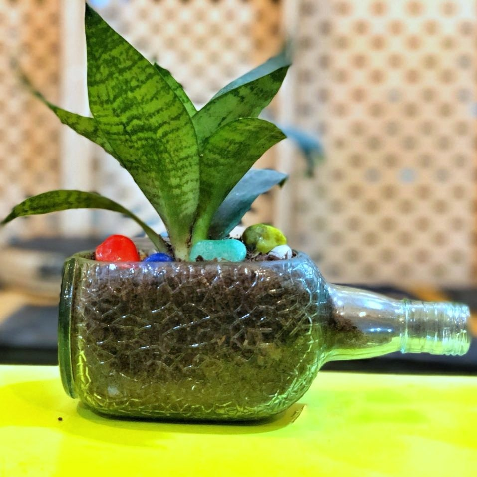 OLD MONK PLANTER -DWARF SANSEVIERIA - Green The Map Upcycled Recycled Fairtrade Ecofriendly
