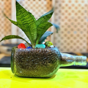 OLD MONK PLANTER -DWARF SANSEVIERIA - Buy Eco Friendly Products - Upycled, Organic, Fair Trade :: Green The Map