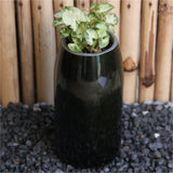 Wine Planter with Dwarf Syngonium
