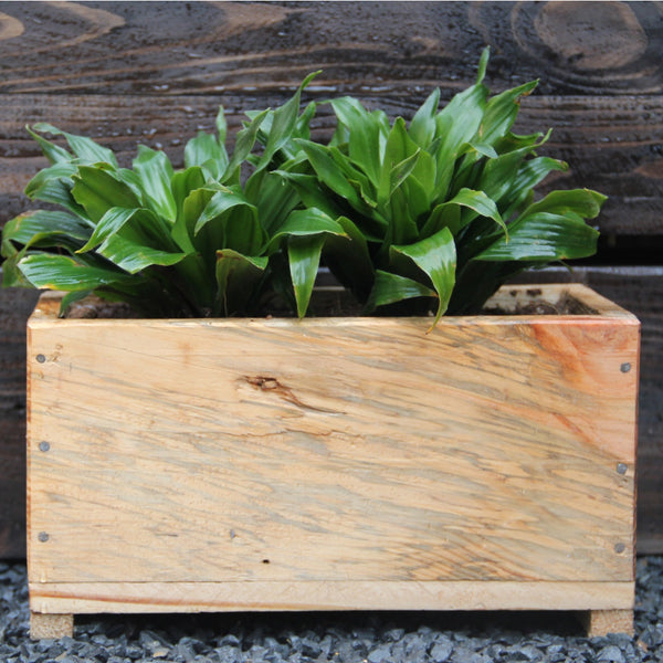 Upcycled Wood Planter With Dracaena Compacta