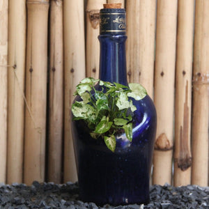 Antiquity Planter with Syngonium/ Dwarf - Green The Map Upcycled Recycled Fairtrade Ecofriendly