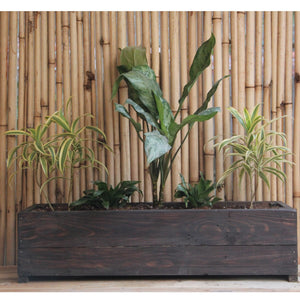 Upcycled Wood Planter With Aglaonema, Song of India and Drecenia Compacta