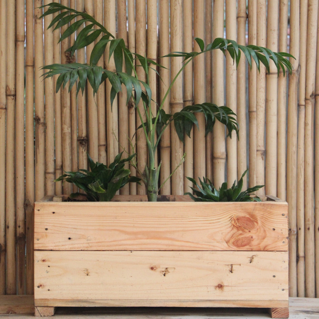 Upcycled Wood Planter With Chaemeadona Elegance and Dracaena Compacta
