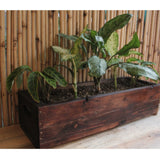 Upcycled Wood Planter With Maranta and Aglaonema