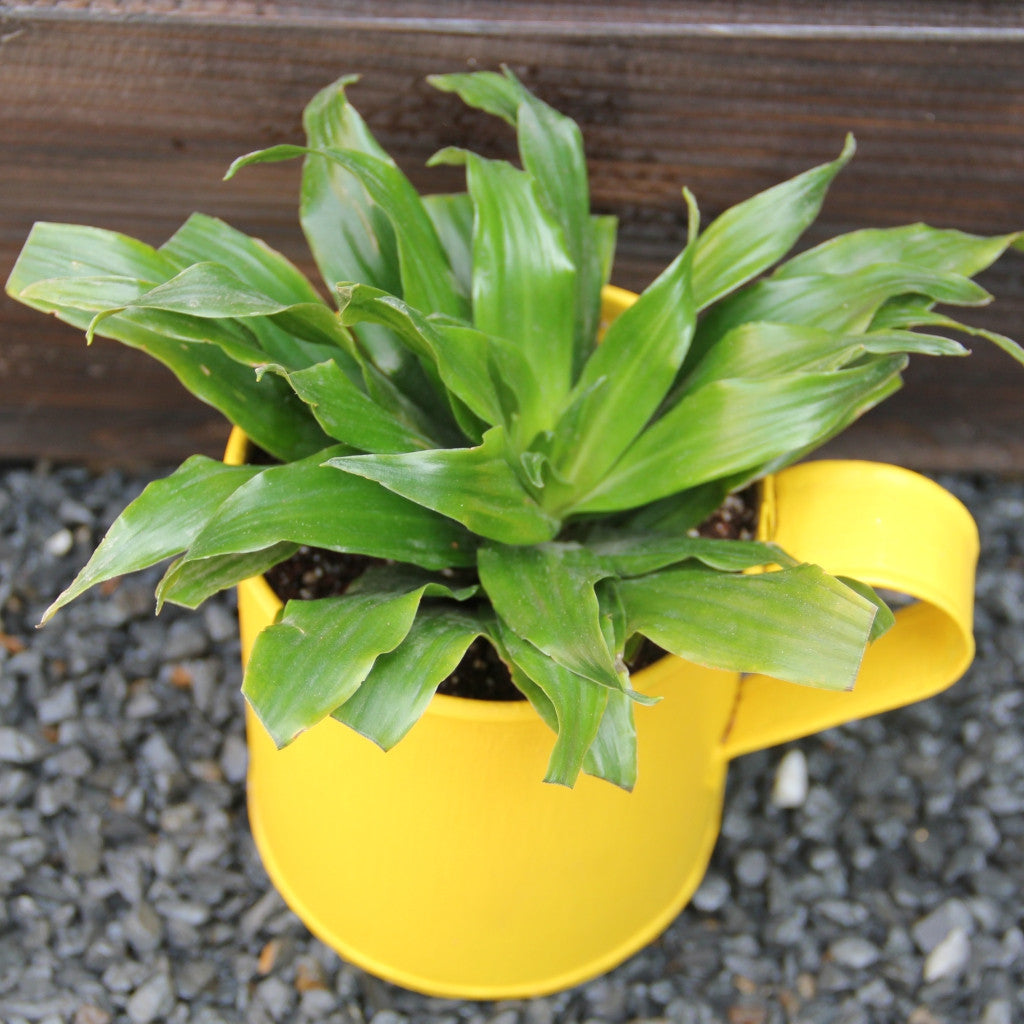 Upcycled Metal Planter-Aluminum Mug