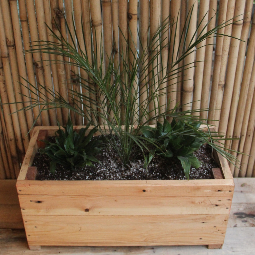 Upcycled Wood Planter With Phoenix Palm and Dracaena Compacta