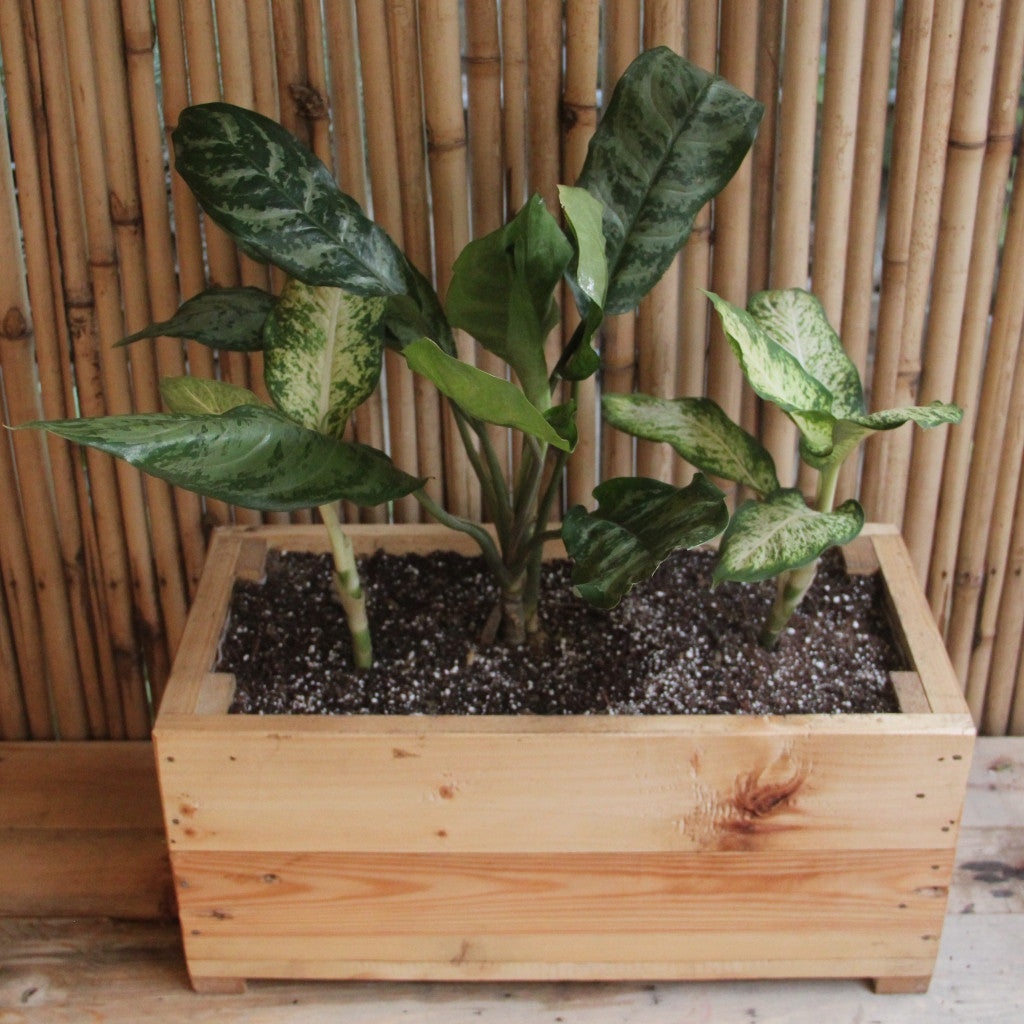 Upcycled Wood Planter With Chaemeadona Elegance and Song of India