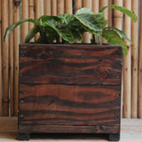 Upcycled Wood Planter With Maranta