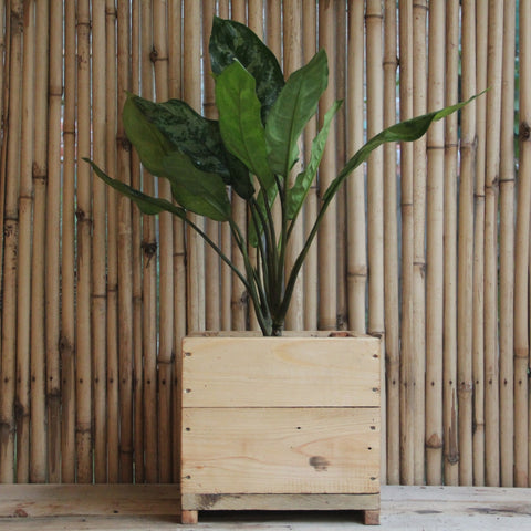 Upcycled Wood Planter With Aglonema