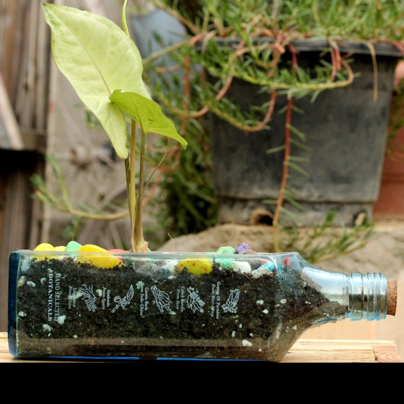 BOMBAY SAPPHIRE PLANTER SYNGONIUM - Green The Map :: Buy Online Eco Friendly Products - Upycled, Organic, Vegan, Handmade, Fair Trade, Green Products From India