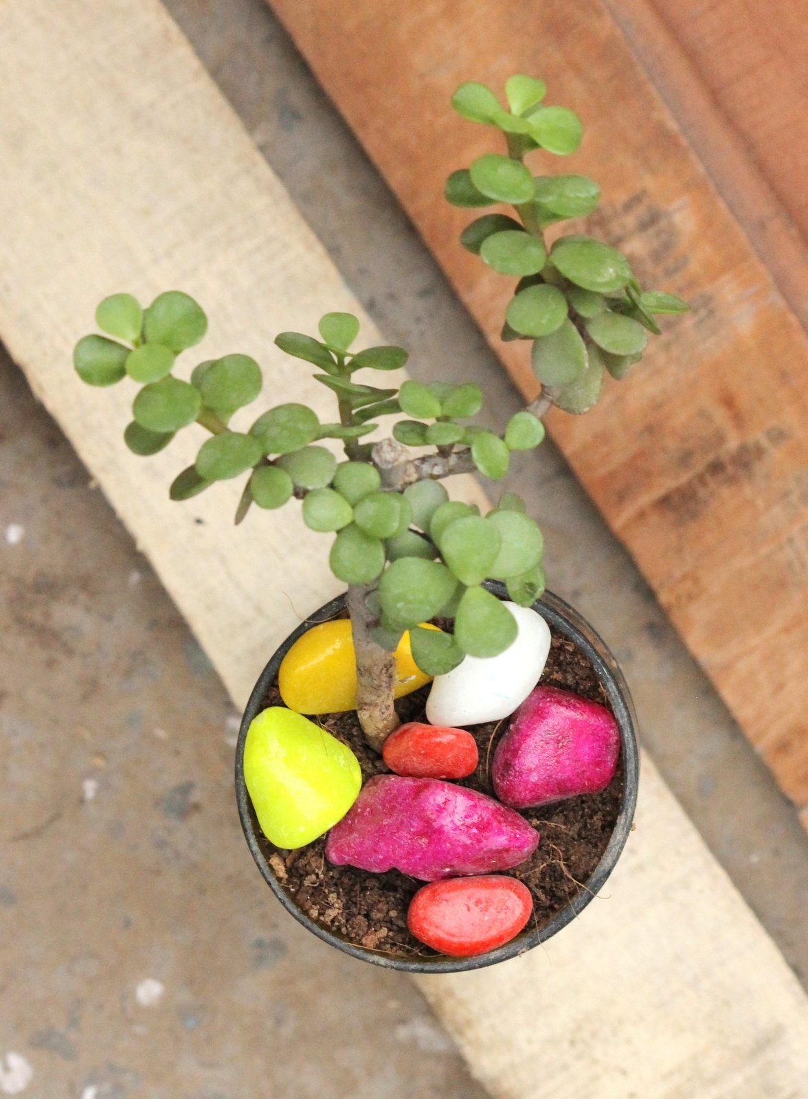 SELF WATERING PLANTER-JADE PLANT - Buy Eco Friendly Products - Upycled, Organic, Fair Trade :: Green The Map