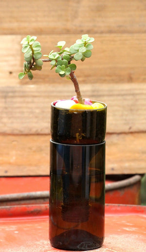SELF WATERING PLANTER-JADE PLANT - Green The Map Upcycled Recycled Fairtrade Ecofriendly