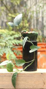 SELF WATERING PLANTER - MONEY PLANT - Green The Map Upcycled Recycled Fairtrade Ecofriendly