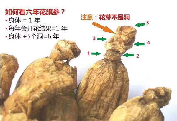 中国邮寄-5年加拿大安省花旗参-大原粒泡参/ 5 Year Canadian Ginseng - Large Bulby (Order to China)